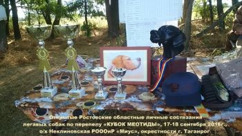 b_350_0_16777215_0_0_images_2016_9_rezultaty-otkrytyh-rostovskih-oblastnyh-lichnyh_1.jpg
